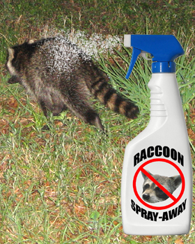 Raccoon Repellent Natural Home Made Recipes And Tips